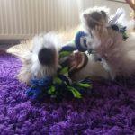 spielender Hund | bunt und einzigartig Coaching - Nicole Gollan