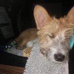schlafender Hund | bunt und einzigartig Coaching - Nicole Gollan