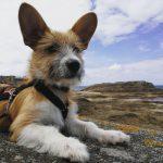 Olli in Saint Malo | bunt und einzigartig Coaching - Nicole Gollan