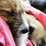 Mein Hund Olli kuschelt mit mir | bunt und einzigartig Coaching - Nicole Gollan