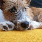 Mein Hund Olli ruht sich aus | bunt und einzigartig Coaching - Nicole Gollan