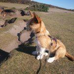 Mein Hund Olli in der Bretagne | bunt und einzigartig Coaching - Nicole Gollan