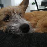 Coaching-Hund Olli ruht sich aus | bunt und einzigartig Coaching - Nicole Gollan
