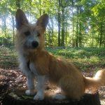 Mein Coaching-Hund | bunt und einzigartig Coaching - Nicole Gollan