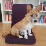 Olli auf einem Meditationsstuhl | bunt und einzigartig Coaching - Nicole Gollan