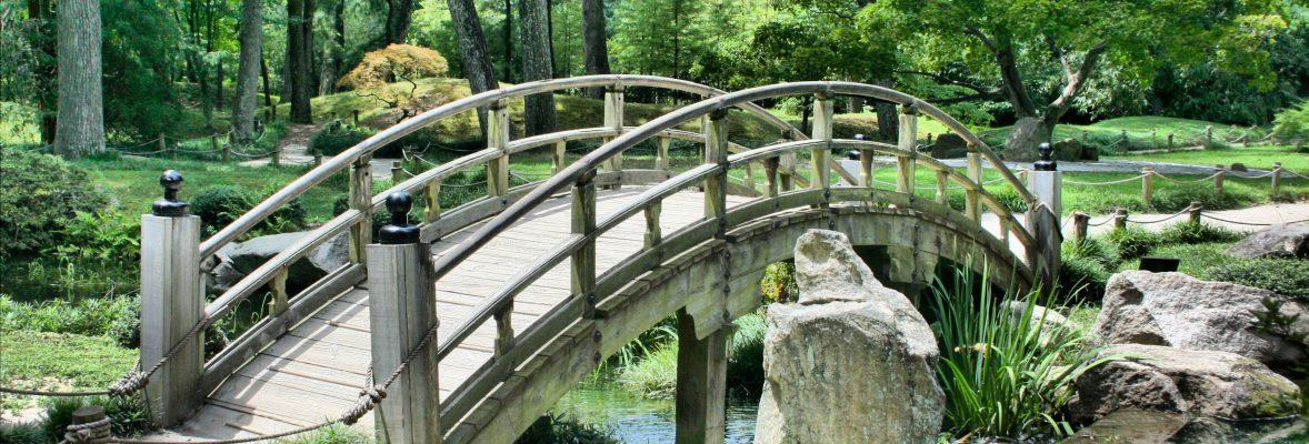 Brücke im Wald | bunt und einzigartig Coaching - Nicole Gollan